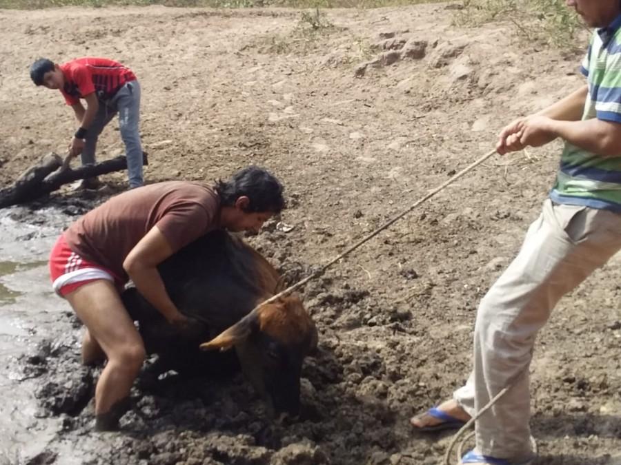 Sequía afecta a las comunidades de la llanura chaqueña en Macharetí
