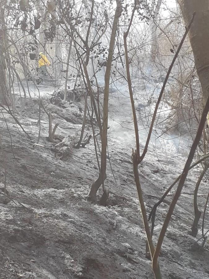 Machareti le da un plazo de 24 horas al Gobierno Nacional, ante la impotencia  de sofocar los incendios forestales