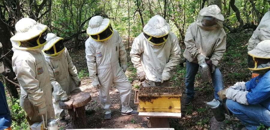 Situación de la cadena productiva apícola en la Región del Chaco, resumen de la primera semana del foro virtual