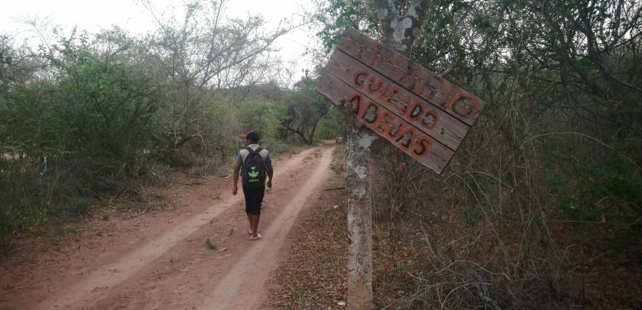 Diversidad de la flora de interés apícola en la comunidad Ancahuazu – Huacaya